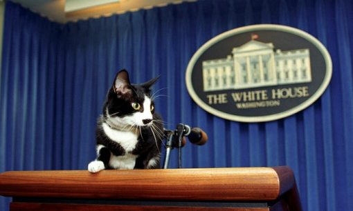 White House Cats