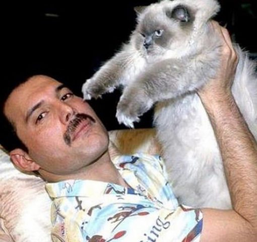 Freddy Mercury's cats